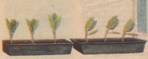 Bitkiler Niçin Güneşe Doğru Eğilirler