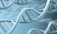 Gen Anomalisinden Kaynaklanan Genetik Taramayla Teşhis Edilebilen Hastalıklar