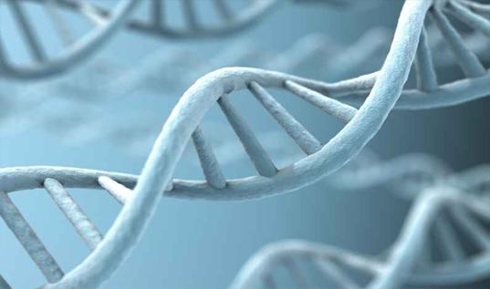 genetik tarama